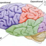 Oppositional Thoughts…Volume 4